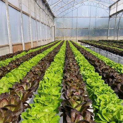 Greenhouses for Growing Leaves in the NFT Method